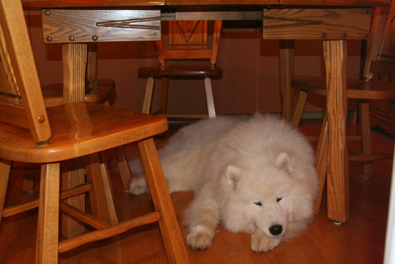 Smelly under the table-fort